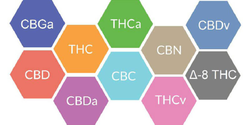 Full Spectrum VS Isolate : Which CBD Is Better For You and your pet? 1