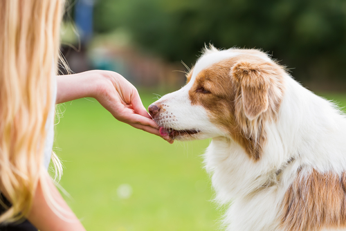 The Importance Of Dog Treats When Training Your Pup