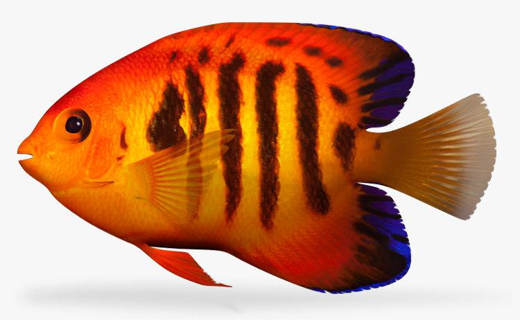 11 Best Saltwater Aquarium Fish for Beginners 37