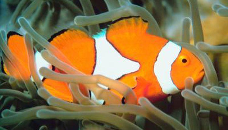 11 Best Saltwater Aquarium Fish for Beginners 31
