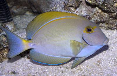 11 Best Saltwater Aquarium Fish for Beginners 4
