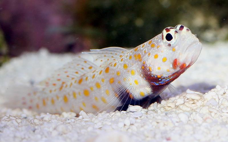 11 Best Saltwater Aquarium Fish for Beginners 38