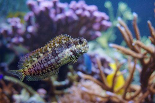 11 Best Saltwater Aquarium Fish for Beginners 39