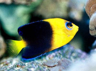 11 Best Saltwater Aquarium Fish for Beginners 32