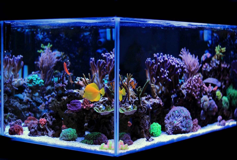 11 Best Saltwater Aquarium Fish for Beginners 28