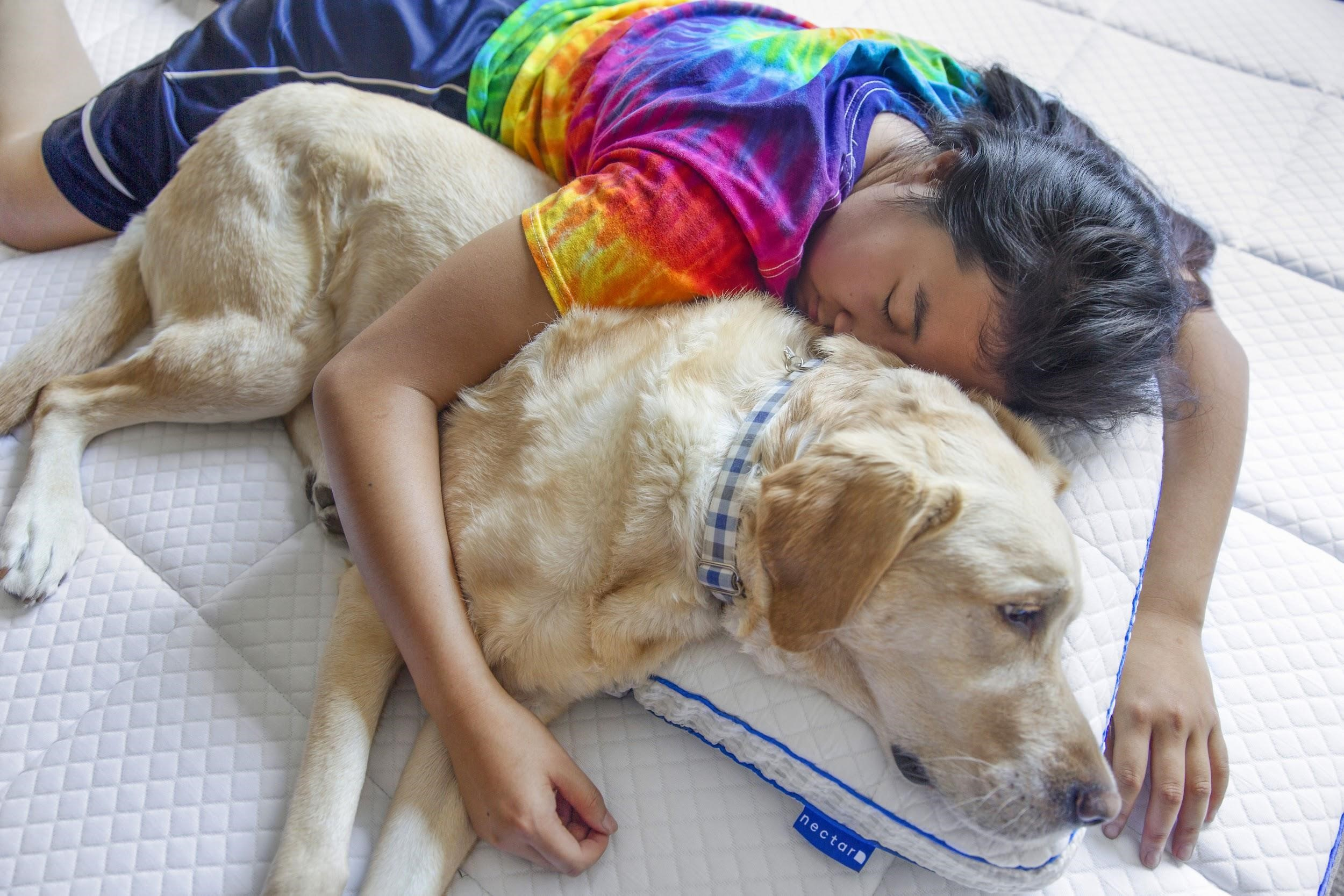 10 best practices for pet owners 12