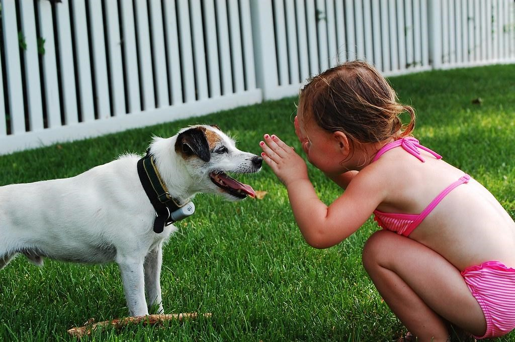 Taking Your Pooch On Vacation? Here's What You Need To Do 2