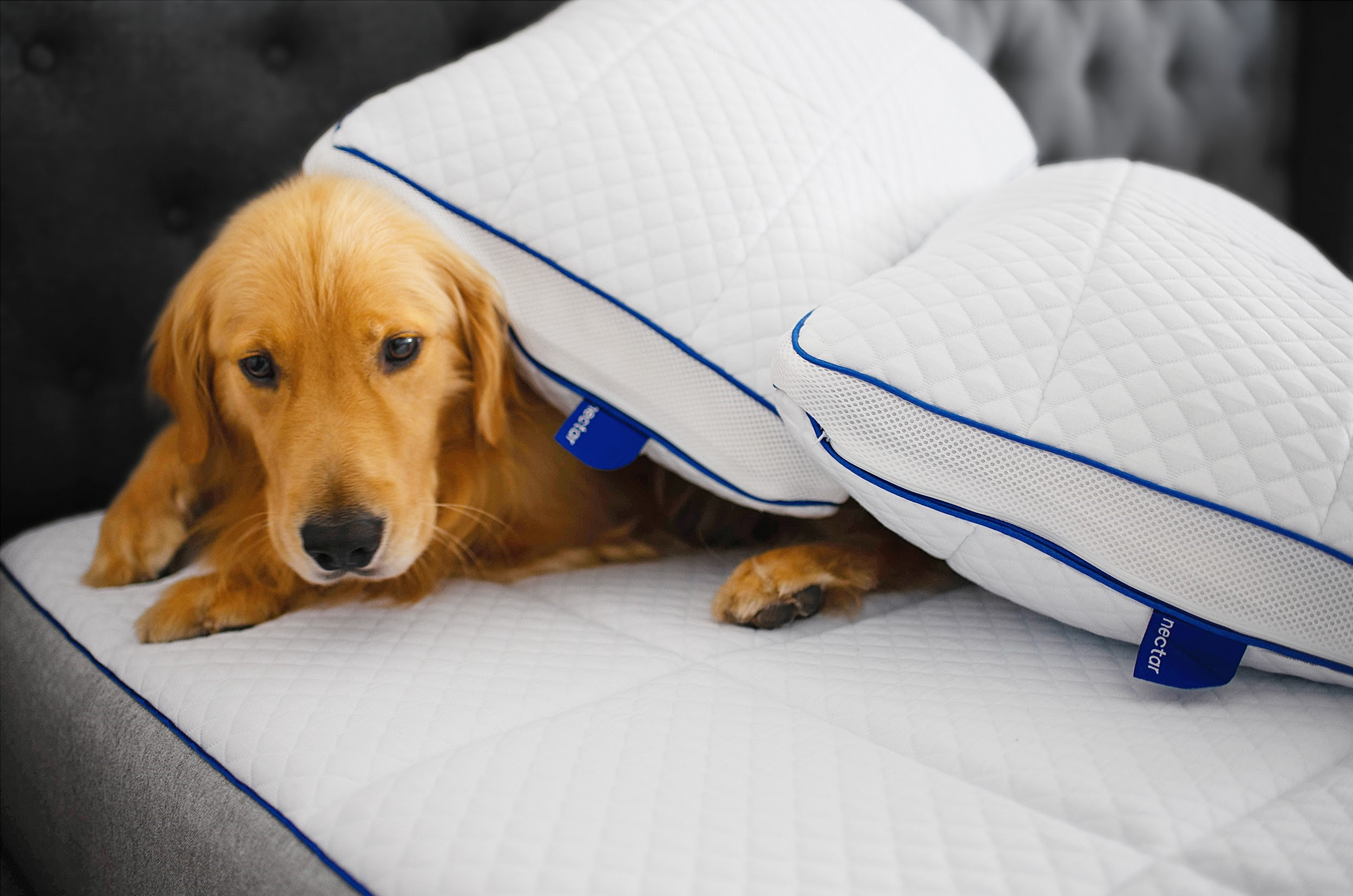 10 best practices for pet owners 11