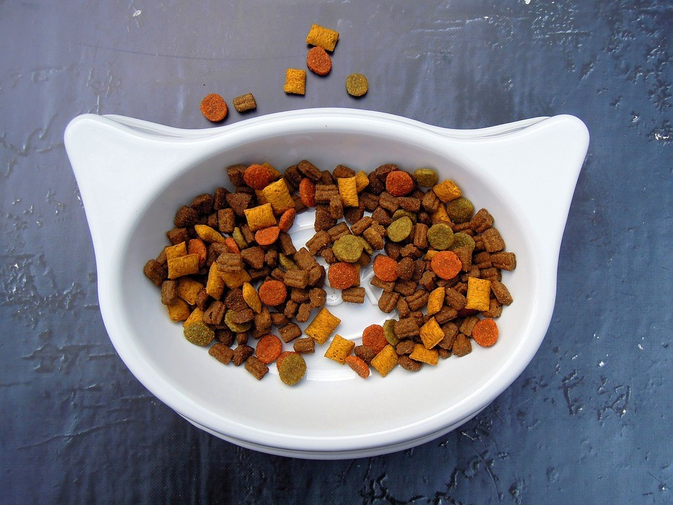 Which Is Better?: Wet Vs Dry Dog Food