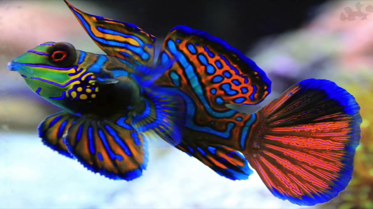 11 Best Saltwater Aquarium Fish for Beginners 10