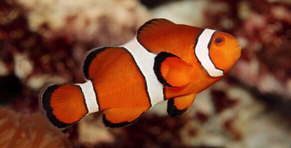 11 Best Saltwater Aquarium Fish for Beginners 29