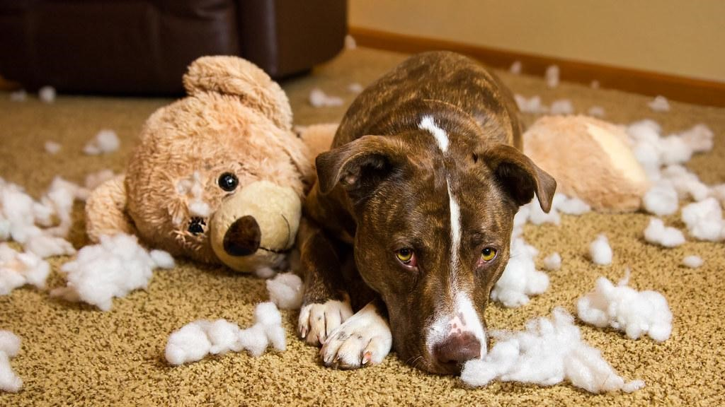 Cleaning Products You Didn't Know Were Dangerous For Your Dog 15