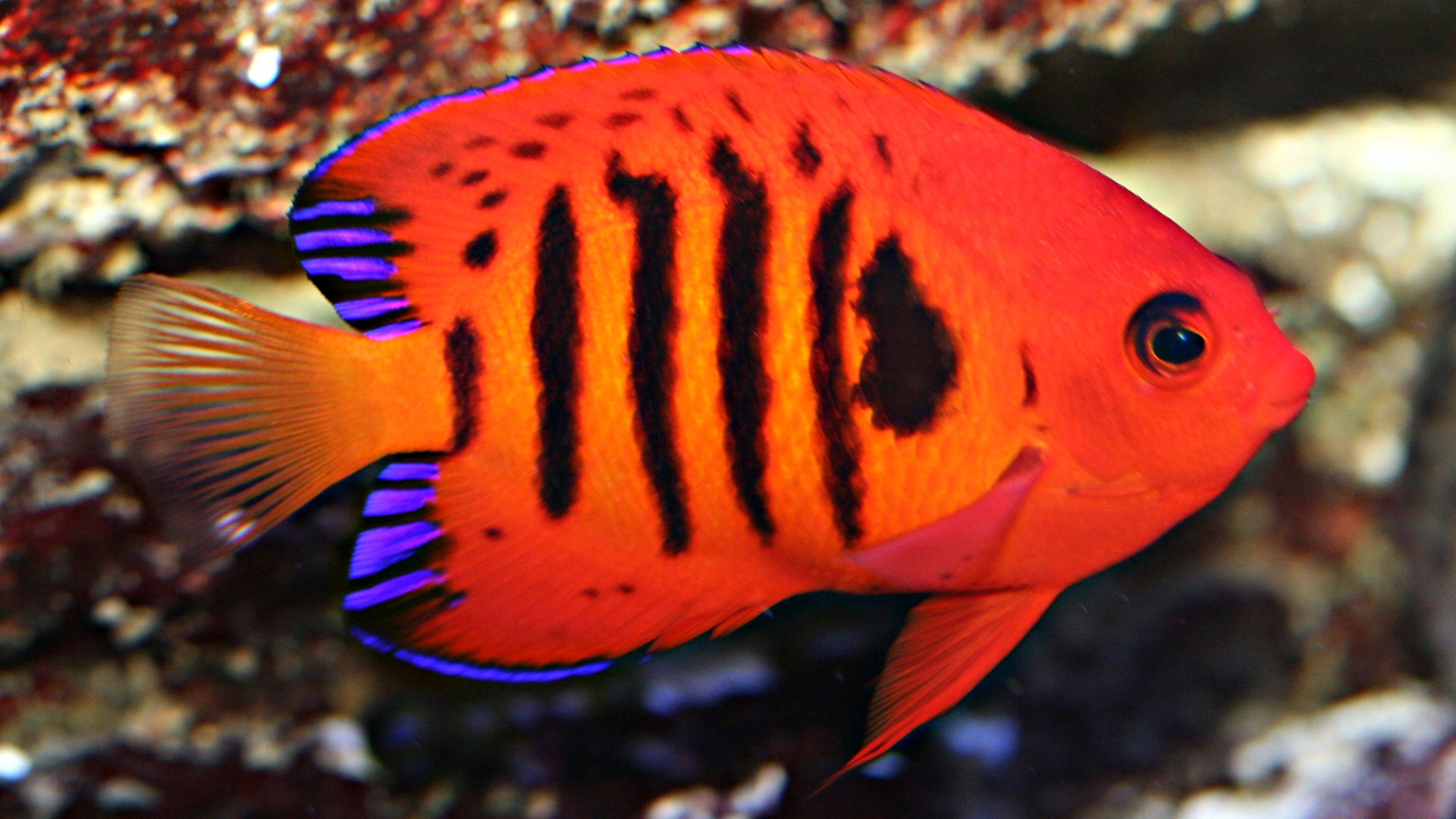 11 Best Saltwater Aquarium Fish for Beginners 27