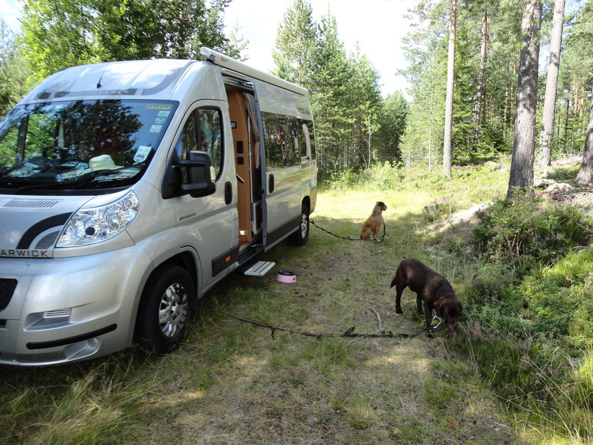 Tips For RVing With Your Dog 10