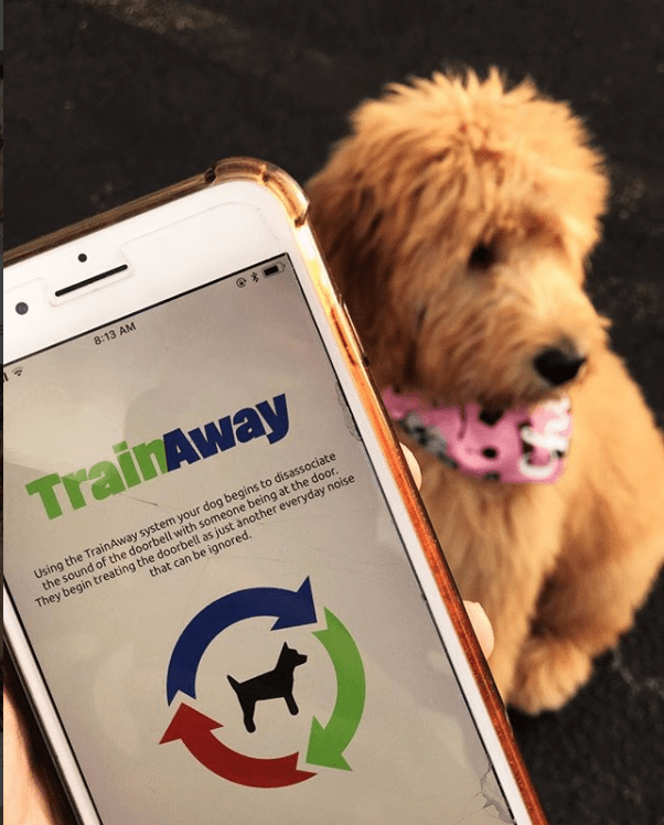 What Should The Best Dog Training App Offer 12
