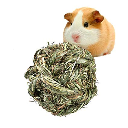 What Do Guinea Pigs Like To Play With? Top 10 Toy Ideas to Entertain Your Cavies