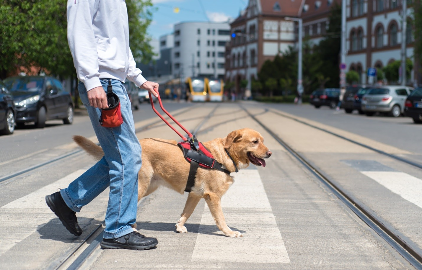How to Train Your Dog to Walk With You 13