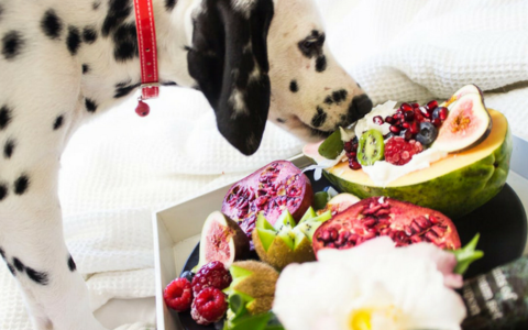 What Fruits and Vegetables Can Your Dog Eat? 22