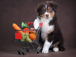 What Fruits and Vegetables Can Your Dog Eat? 21