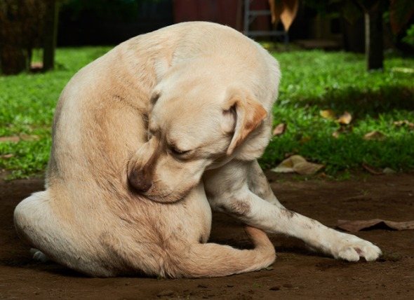 7 Tips for Getting Rid of Fleas on Dogs 21