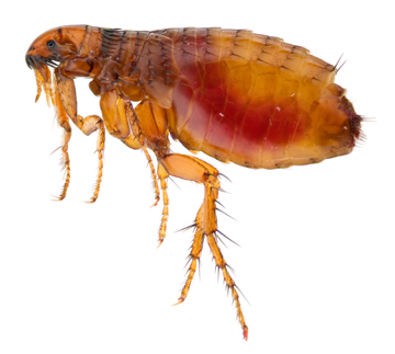 7 Tips for Getting Rid of Fleas on Dogs 18