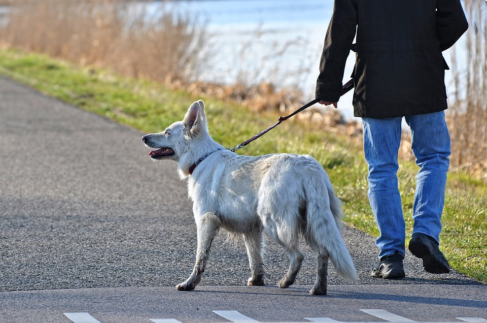 How to Train Your Dog to Walk With You 12