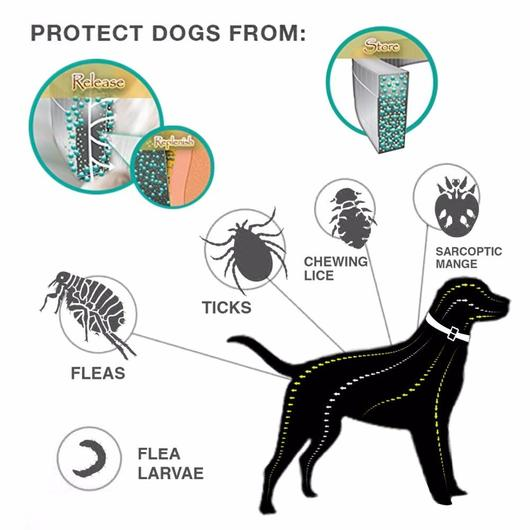 How Does Pet Flea Shampoo Work On Fleas 18