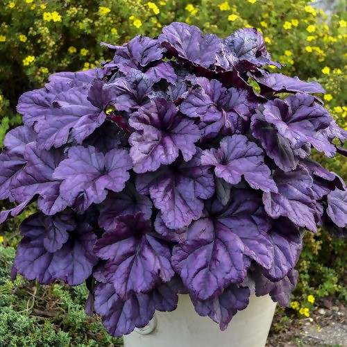 15 Dog-Safe Plants to Add to Your Garden 11