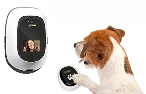 Will the best dog camera review help: why you need one right now? 11