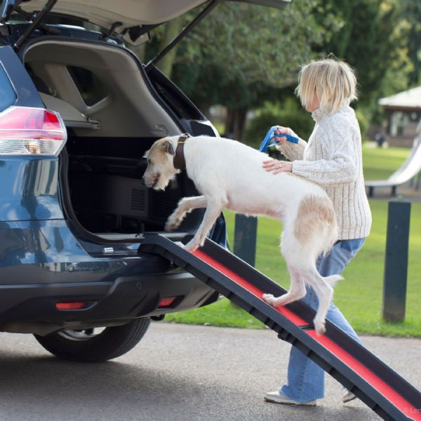 5 Reasons Why you should Insure your Pet 6