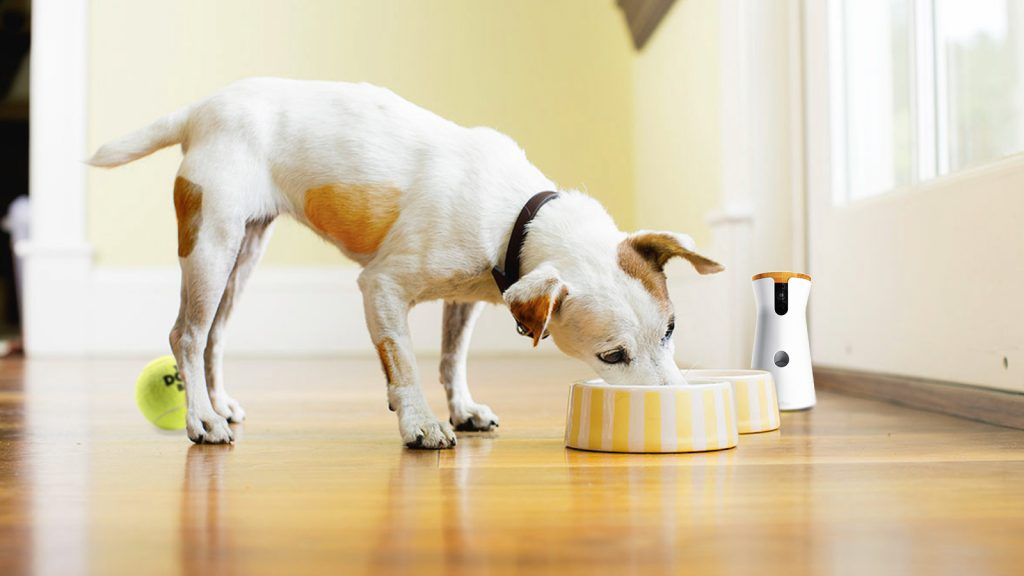 Right Food for Your Dog
