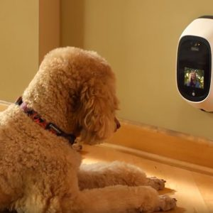 Will the best dog camera review help: why you need one right now?