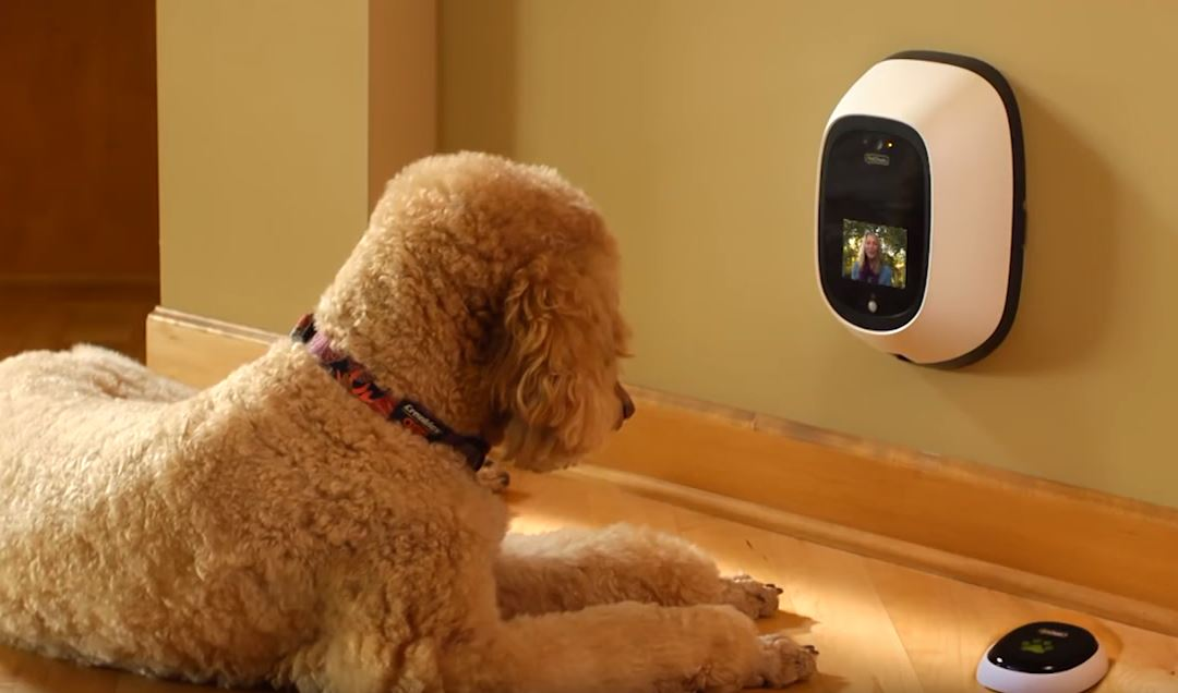 Will the best dog camera review help: why you need one right now? 12