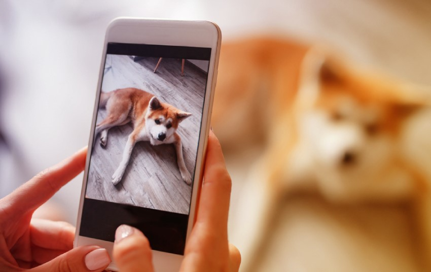 Will the best dog camera review help: why you need one right now? 13