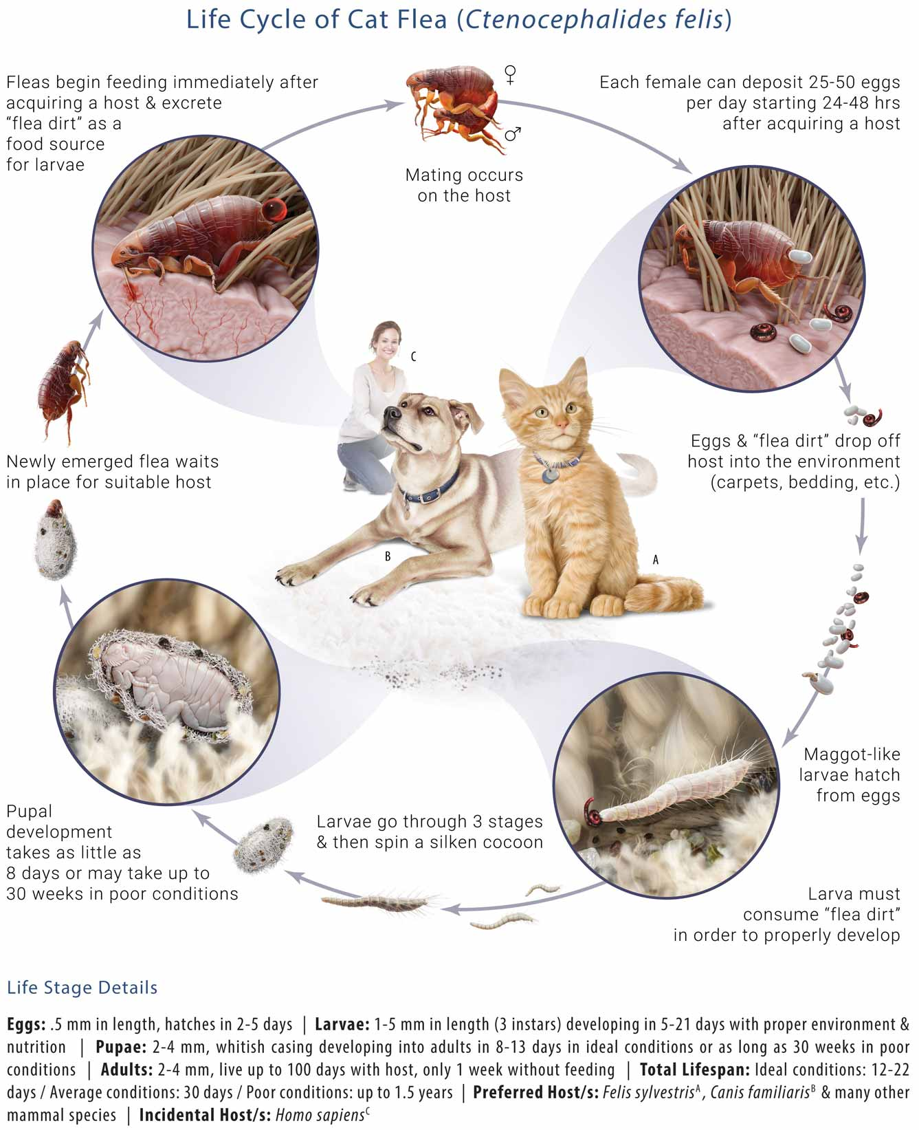 6 tips you should know on getting rid of fleas on dogs 13