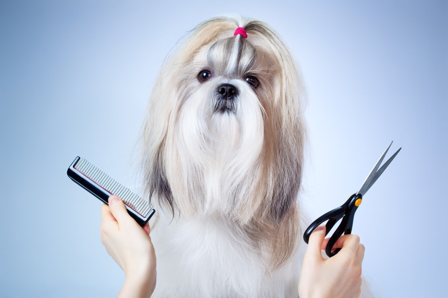 10 Grooming Tips Every Dog Lover Should Know