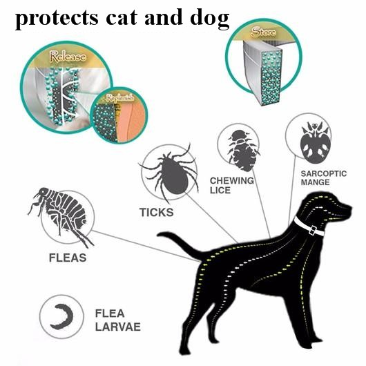 Pet Care: 4 Signs Your Dog Has A Tick 12