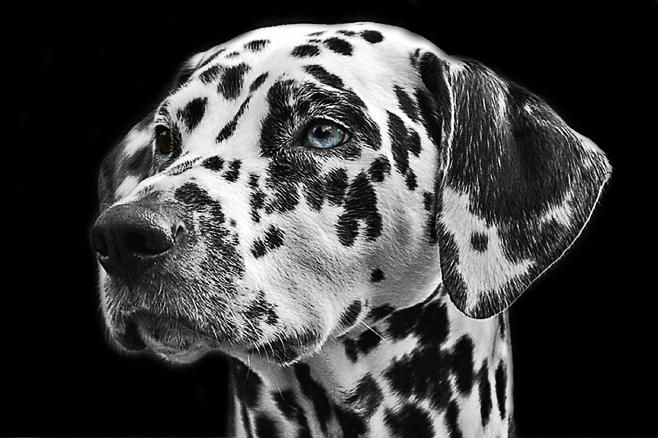Ultimate Dog Breed Matches for the 12 Zodiacs 7