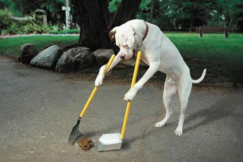 How to Clean Dog Poop: Everything You Need to Know