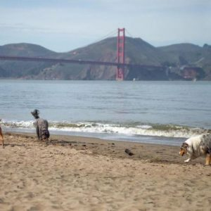 6 Dog-friendly attractions in San Francisco