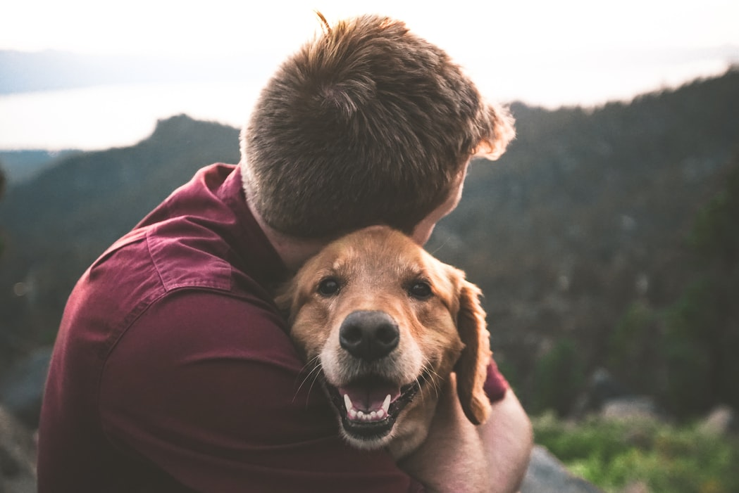 How to Get a Service Dog for Anxiety: A Helpful Guide 4