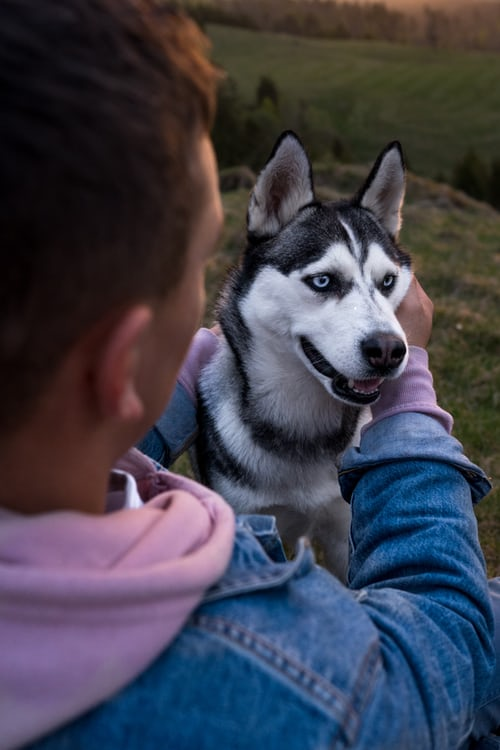 5 Reasons Why Becoming a Dog Trainer Is the Best Job Ever 12