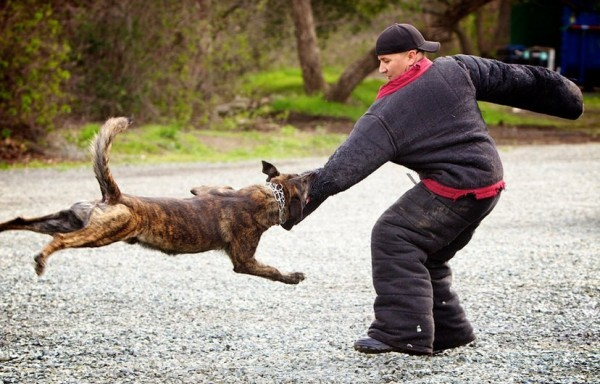 How To Deal With A Dog Attack 15