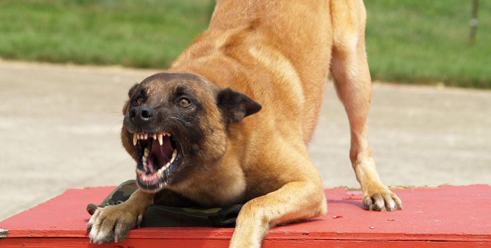 How To Deal With A Dog Attack 13