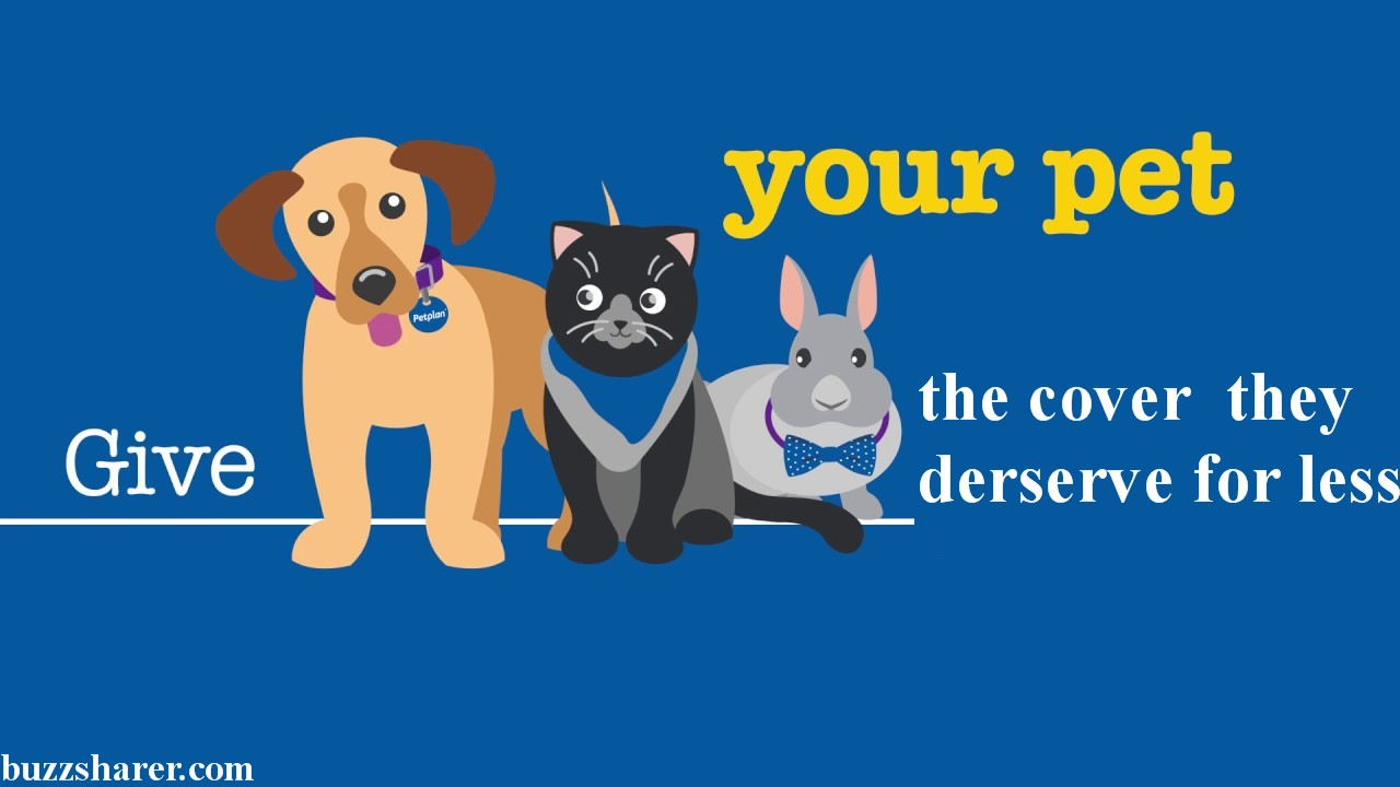 5 Reasons Why you should Insure your Pet