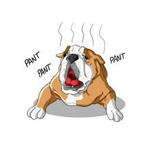 Is Heat Deadly For Brachycephalic (Short-Muzzled) Dogs 2