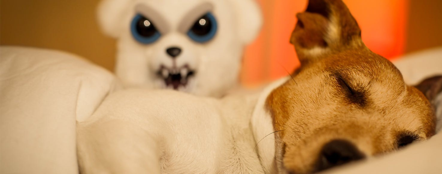 Nightmares in Dogs