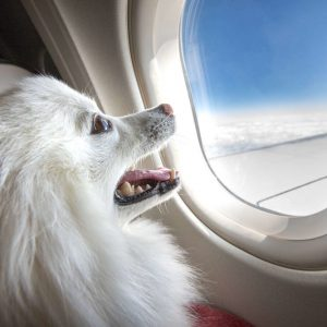 The Top Tips for Traveling With Your Dog
