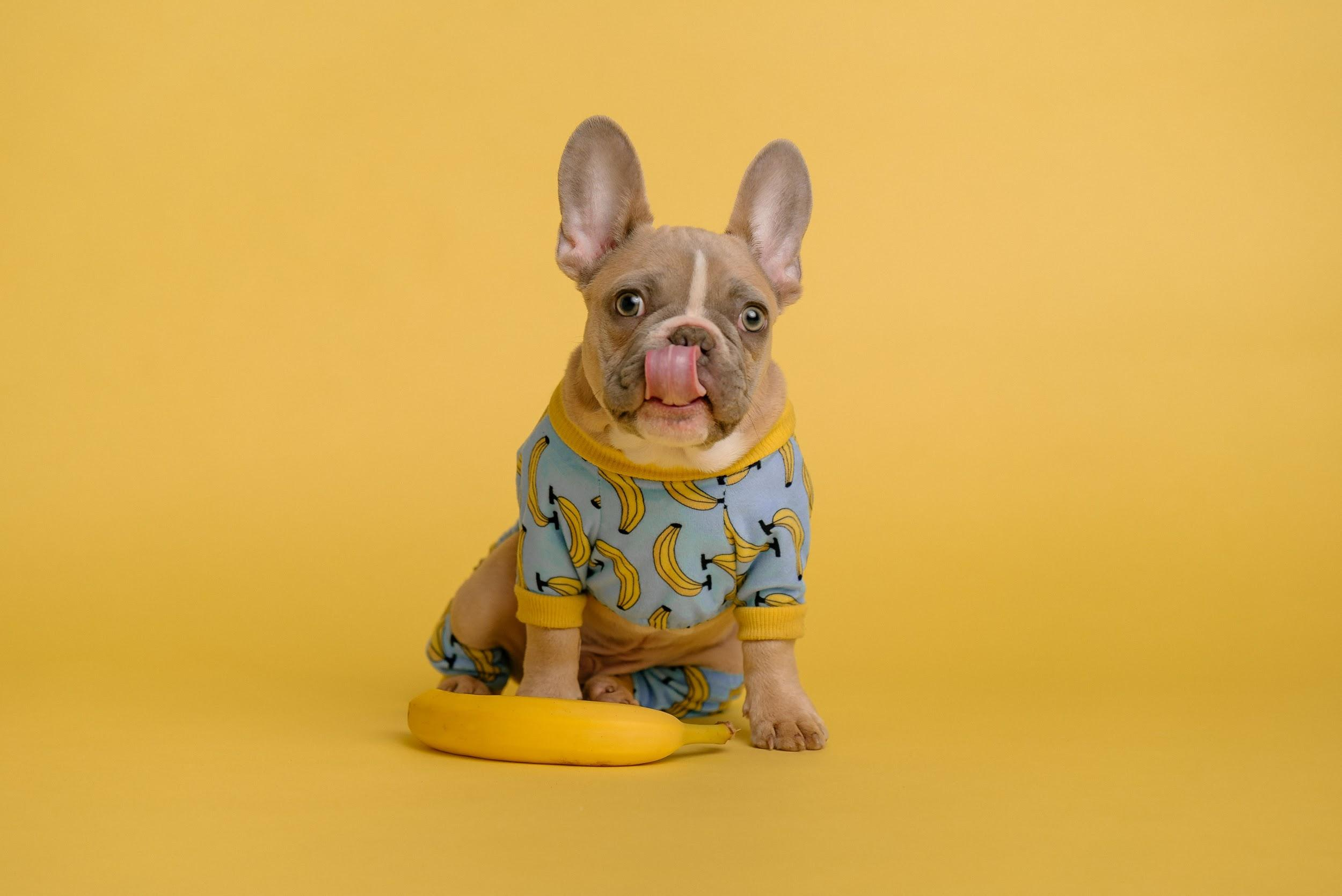 Dog Clothes Pros and Cons