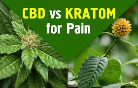 Kratom as a pain Manager and complement to CBD 1